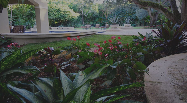 Coral Gables Landscaping