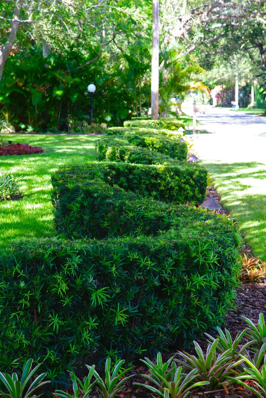 Grassing Installation Premier Horticulture Coral Gables